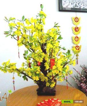 Mai Tết bonsai 444HL