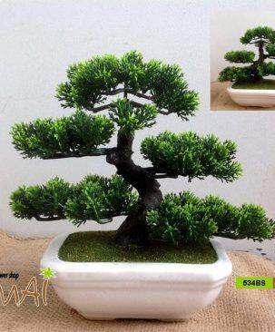 Tùng Bonsai 534BSN