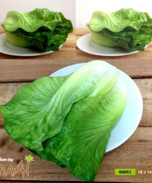 Rau xà lách, salad 608RX