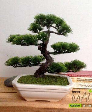 Tùng bonsai 608BSN