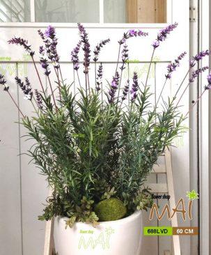 Chậu Lavender 688LVD