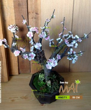 Đào bonsai 559DT