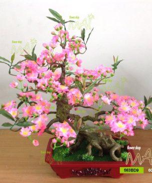 Đào bonsai 60cm 563BD9
