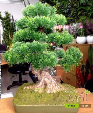Tùng bonsai 714CV
