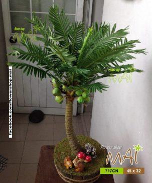 Cây dừa nhỏ 717CN