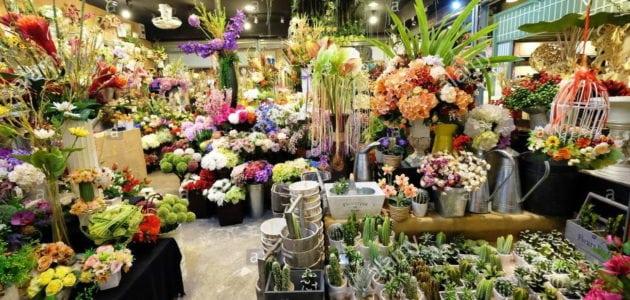 Tại sao hoa vải, cây giả, cây nhựa lại có giá cao?