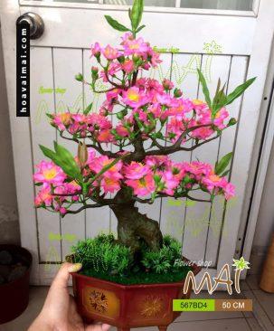 Đào bonsai 567BD4