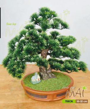 Tùng bonsai 759CN